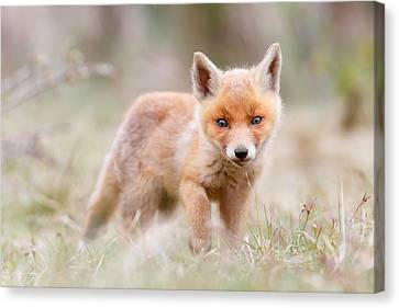Little Fox Kit, Big World Canvas Print by Roeselien Raimond