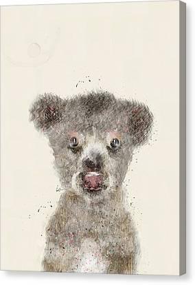 Little Koala Canvas Print by Bri B