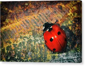 Little Ladybug Canvas Print by Kasia Bitner