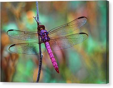 Little Pink Dragonfly  Canvas Print by Saija Lehtonen