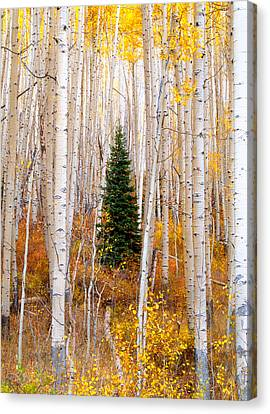 Little Tree Canvas Print by Tim Reaves