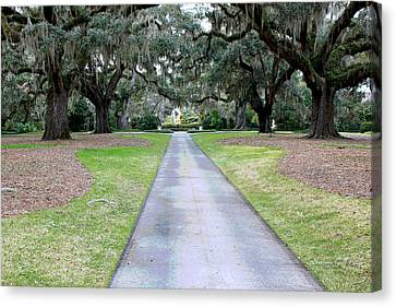 Live Oak Alee Canvas Print by Suzanne Gaff