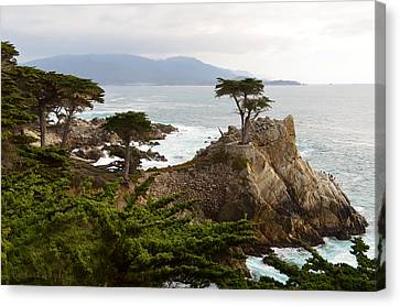 Lone Cypress Large Canvas Print by Barbara Snyder