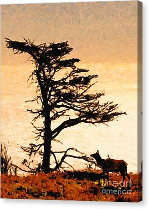Lone Elk Of Tomales Bay - Photoart Canvas Print by Wingsdomain Art and Photography