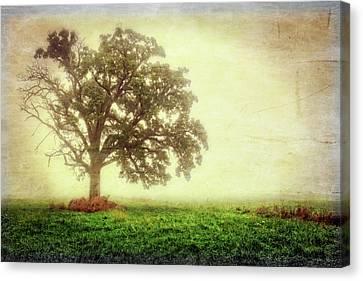 Lone Oak Tree In Fog Canvas Print by Jennifer Rondinelli Reilly