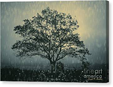 Lone Tree And Stormy Evening Canvas Print by David Gordon