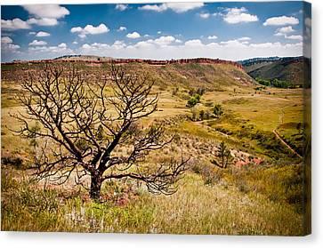 Lone Tree, Colorado Canvas Print by Preston Broadfoot