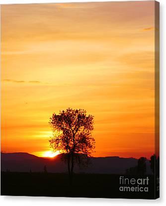 Lone Tree Sunset Canvas Print by Nick Gustafson