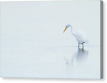 Lonely Egret Canvas Print by Karol Livote