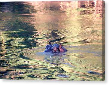 Lonely Hippo Canvas Print by Sebastian Musial
