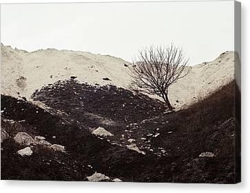 Lonely Tree Canvas Print by Anton Popov