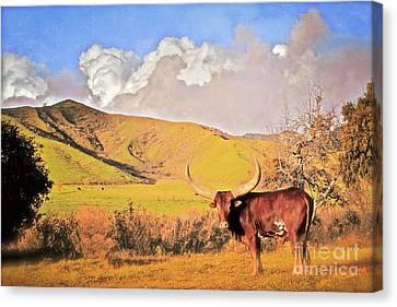 Lonesome Longhorn Ojai California Canvas Print by Gus McCrea
