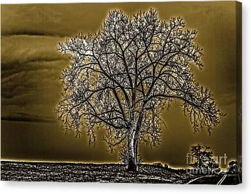 Lonesome Tree Canvas Print by William Norton