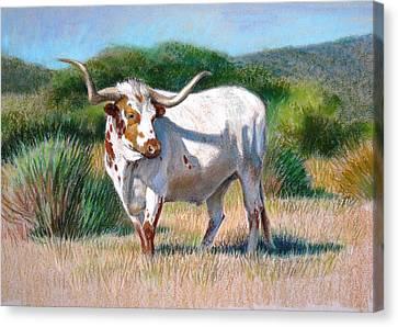 Longhorn Bull Canvas Print by Sue Halstenberg