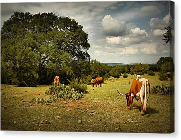 Longhorns Of Texas Canvas Print by Linda Unger