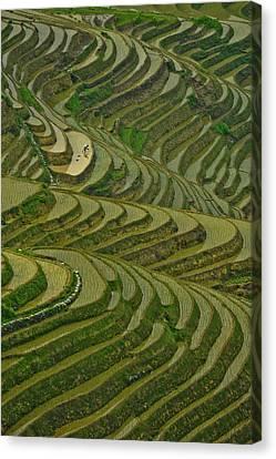 Longji Rice Fields Canvas Print by Clipworks