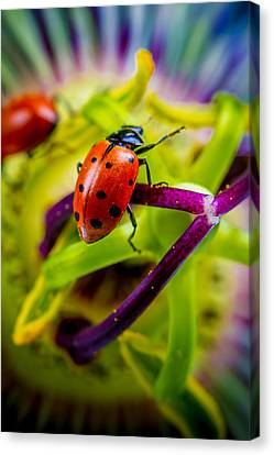 Look At The Colors Over There. Canvas Print by TC Morgan