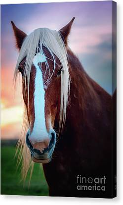 Wild Thing Canvas Print by Tamyra Ayles