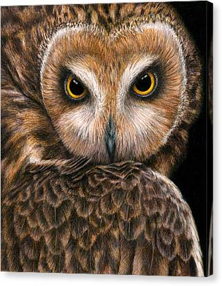 Look Into My Eyes Canvas Print by Pat Erickson