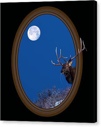 Looking Beyond Canvas Print by Shane Bechler