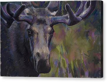 Looking For Love Or Maybe Lunch Canvas Print by Billie Colson
