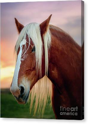 Looking For My Master Canvas Print by Tamyra Ayles