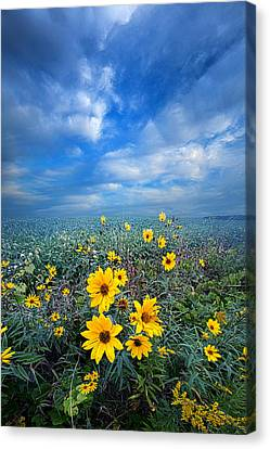 Looking For Space Canvas Print by Phil Koch