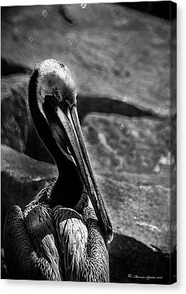 Looking Good B/w Canvas Print by Marvin Spates