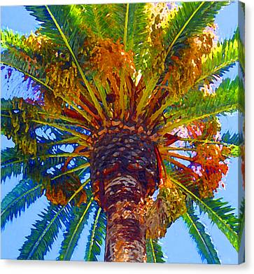 Looking Up At Palm Tree  Canvas Print by Amy Vangsgard