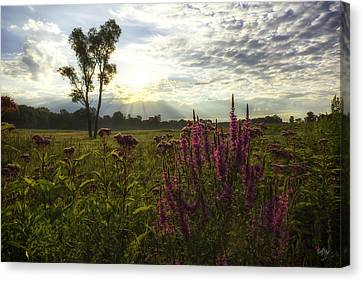 Loosestrife Canvas Print by Everet Regal