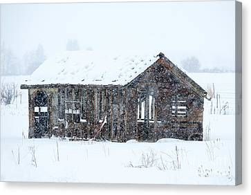 Lost In Winter Canvas Print by Mike Dawson