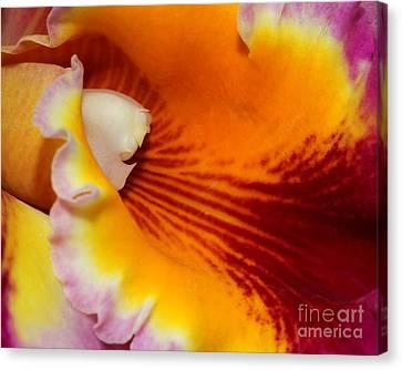 Lotsa Color Canvas Print by Sabrina L Ryan