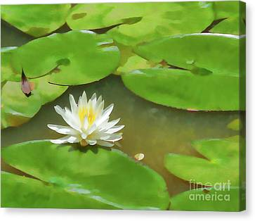 Lotus Flower In The Pond  15 Canvas Print by Lanjee Chee
