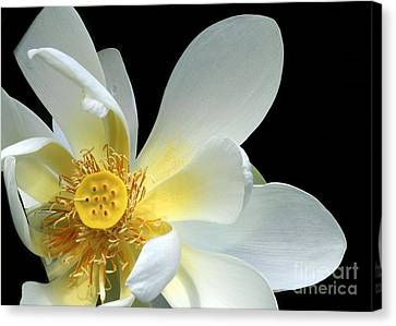 Lotus From Above Canvas Print by Sabrina L Ryan