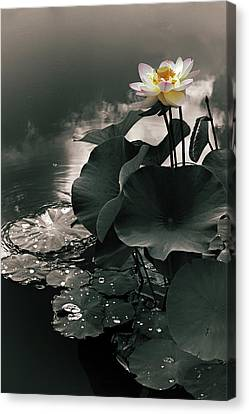 Lotus In The Mist Canvas Print by Jessica Jenney