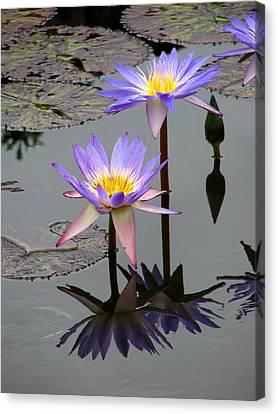 Lotus Reflection 4 Canvas Print by David Dunham