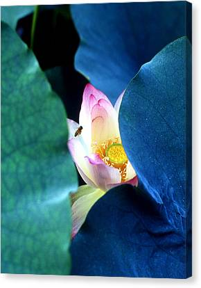 lotus Temptation of depth Canvas Print by Lian Wang