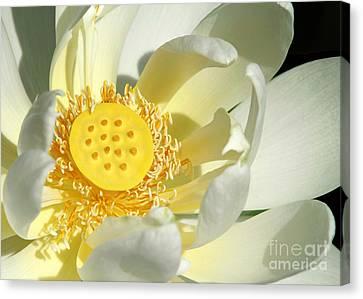 Lotus Up Close Canvas Print by Sabrina L Ryan