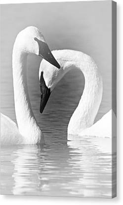 Love In Black And White Canvas Print by Larry Ricker