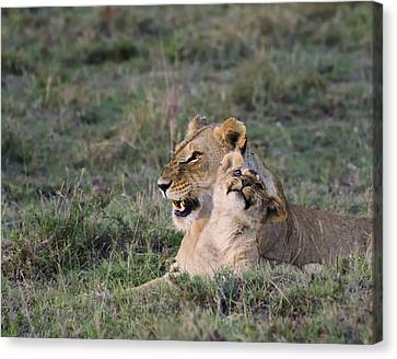 Love In The Masai Mara Canvas Print by Marion McCristall