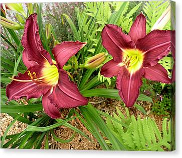 Lovely Lilies Canvas Print by Kate Gallagher