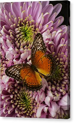 Lovely Orange Butterfly Canvas Print by Garry Gay