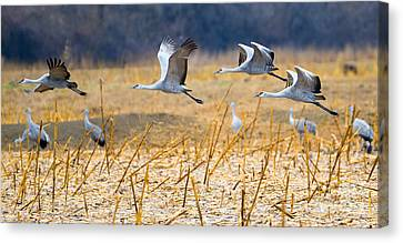 Low Level Flyby Canvas Print by Mike Dawson