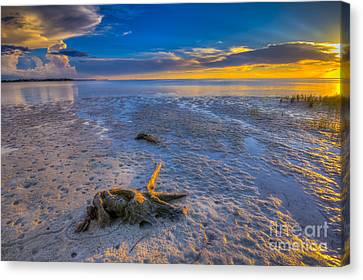 Low Tide Stump Canvas Print by Marvin Spates