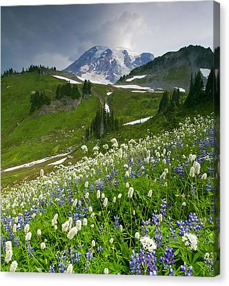 Lupine Storm Canvas Print by Mike  Dawson