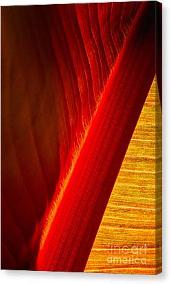 Luscious Lines Canvas Print by Marilyn Cornwell