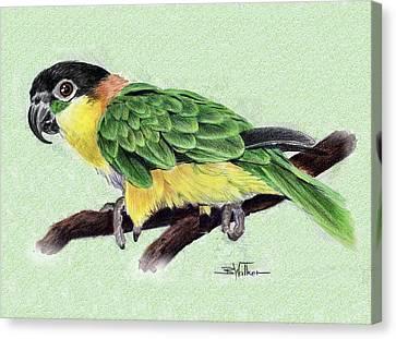 Lynne's Parrot Canvas Print by Barbara Walker