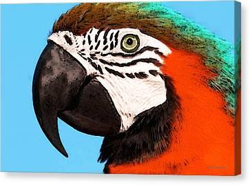 Macaw Bird - Rain Forest Royalty Canvas Print by Sharon Cummings