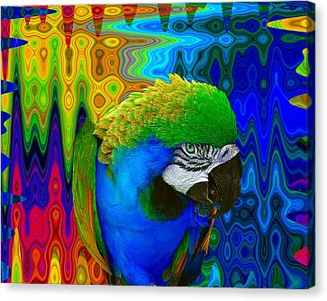 Macaw Madess Canvas Print by Amanda Vouglas