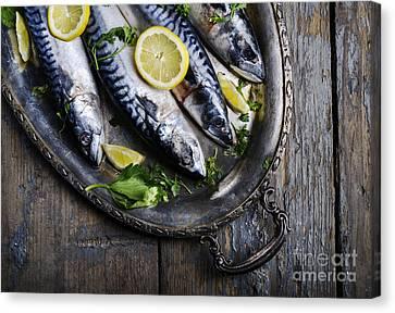 Mackerels On Silver Plate Canvas Print by Jelena Jovanovic